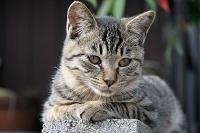 cat0102-066_m.jpg