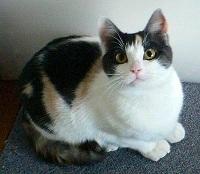 cat214.jpg